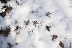 χιόνι χλόης κάτω Στοκ Εικόνες