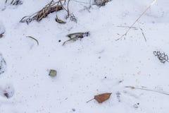 χιόνι χλόης κάτω Στοκ Φωτογραφία