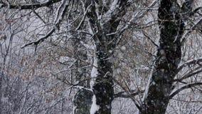 χιόνι απόθεμα βίντεο