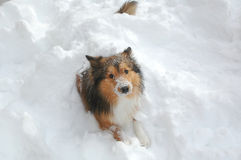 χιόνι 13 σκυλιών Στοκ Φωτογραφίες