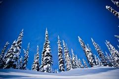 Χιόνι 2 χειμερινών δέντρων στοκ εικόνες με δικαίωμα ελεύθερης χρήσης