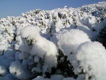 χιόνι Στοκ Φωτογραφίες