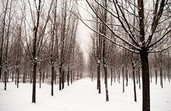 χιόνι Στοκ εικόνες με δικαίωμα ελεύθερης χρήσης