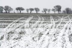 χιόνι traks Στοκ εικόνα με δικαίωμα ελεύθερης χρήσης