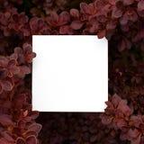 Χλεύη επάνω με το floral πλαίσιο Στοκ Εικόνες