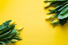 Χλεύη επάνω των κίτρινων τουλιπών πέρα από το κίτρινο υπόβαθρο στοκ εικόνες με δικαίωμα ελεύθερης χρήσης