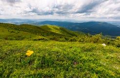 Χλοώδεις λόφοι των Καρπάθιων ορών το καλοκαίρι Στοκ εικόνα με δικαίωμα ελεύθερης χρήσης