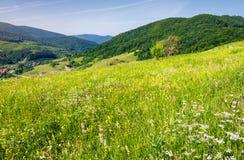 Χλοώδες λιβάδι σε μια βουνοπλαγιά στοκ φωτογραφία με δικαίωμα ελεύθερης χρήσης