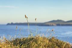 Χλοώδης απότομος βράχος του κεφαλιού του ST Davids σε Pembrokeshire στοκ εικόνες με δικαίωμα ελεύθερης χρήσης