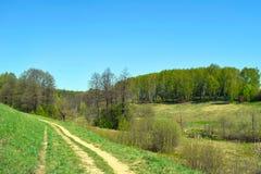 Χλοώδης δρόμος, πράσινοι λόφοι, δάσος σημύδων και μπλε ουρανός στοκ φωτογραφία
