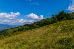 Χλοώδης κάθοδος από έναν υψηλό λόφο με τα σπάνια πράσινα δέντρα σε ένα υπόβαθρο μπλε ουρανού carpathians στοκ εικόνα με δικαίωμα ελεύθερης χρήσης