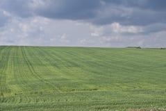 χλοώδης πράσινος πεδίων Στοκ Εικόνες