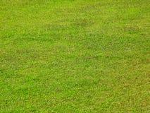 χλοώδης πράσινος χορτοτά&p Στοκ Εικόνα