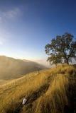 χλοώδη απορρίματα βουνο&p στοκ εικόνες