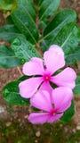 Χλωρίδα, άνθιση φύσης, όμορφος, φωτεινή, εποχή, χρώμα, petwl στοκ φωτογραφία με δικαίωμα ελεύθερης χρήσης