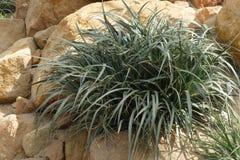 Χλωρίδα ερήμων με το θάμνο στοκ εικόνα