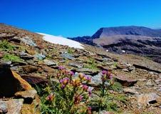 Χλωρίδα της οροσειράς Νεβάδα στοκ εικόνες