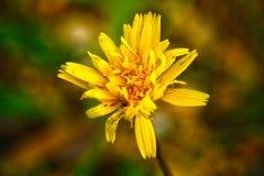 Χλωρίδα του μεσογειακού salentina λεκέδων Στοκ Εικόνα