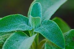 Χλωρίδα του μεσογειακού salentina λεκέδων Στοκ εικόνες με δικαίωμα ελεύθερης χρήσης