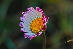 Χλωρίδα του μεσογειακού salentina λεκέδων Στοκ Εικόνες