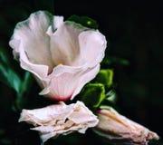 χλωρίδα στοκ εικόνες