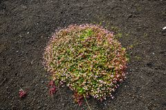 χλωρίδα στοκ φωτογραφίες