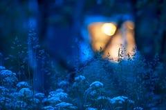 Χλόες λιβαδιών στη θερινή νύχτα στοκ εικόνες