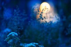 Χλόες λιβαδιών στη θερινή νύχτα στοκ εικόνα