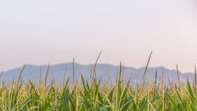 Χλόες με το βουνό και τον ουρανό στο υπόβαθρο στοκ φωτογραφία με δικαίωμα ελεύθερης χρήσης
