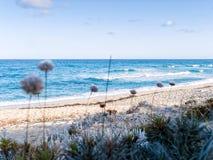 Χλόες στην ακτή Στοκ Εικόνες