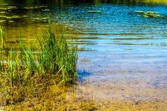 Χλόες στη λίμνη του Taylor στη Βρετανική Κολομβία, Καναδάς στοκ εικόνα