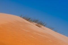 χλόη αμμόλοφων ερήμων Στοκ φωτογραφία με δικαίωμα ελεύθερης χρήσης