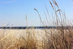 Χλόη αμμόλοφων με τον ωκεανό στο υπόβαθρο Στοκ Φωτογραφία