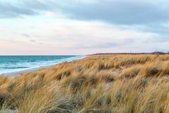 Χλόη αμμόλοφων που φυσά στον αέρα Στοκ Φωτογραφία
