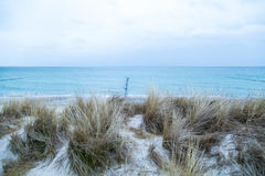 Χλόη αμμόλοφων που φυσά στον αέρα Στοκ Εικόνες