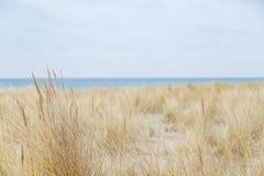 Χλόη αμμόλοφων που φυσά στον αέρα Στοκ εικόνα με δικαίωμα ελεύθερης χρήσης