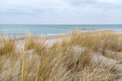 Χλόη αμμόλοφων που φυσά στον αέρα Στοκ εικόνες με δικαίωμα ελεύθερης χρήσης
