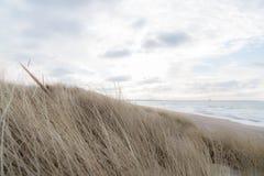 Χλόη αμμόλοφων που φυσά στον αέρα Στοκ φωτογραφίες με δικαίωμα ελεύθερης χρήσης