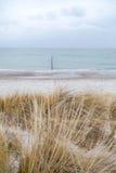 Χλόη αμμόλοφων που φυσά στον αέρα Στοκ Εικόνα
