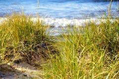 Χλόη αμμόλοφων στην ακτή Στοκ Εικόνες