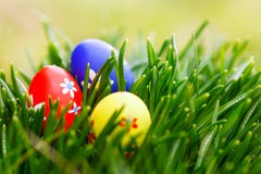 χλόη αυγών Πάσχας Στοκ Φωτογραφία