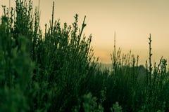 Χλόη βουνών χαλάρωσης τροπική με το ηλιοβασίλεμα στο υπόβαθρο στοκ εικόνες με δικαίωμα ελεύθερης χρήσης