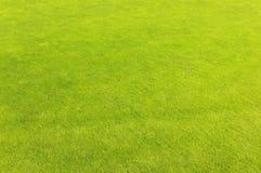 χλόη γκολφ πεδίων πράσινη Στοκ εικόνες με δικαίωμα ελεύθερης χρήσης
