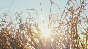 Χλόη και ήλιος φθινοπώρου απόθεμα βίντεο