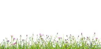 Χλόη και απομονωμένο wildflowers υπόβαθρο διανυσματική απεικόνιση