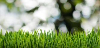 χλόη και αφηρημένες φυσαλίδες στην κινηματογράφηση σε πρώτο πλάνο κήπων Στοκ Φωτογραφίες