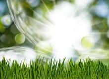 χλόη και αφηρημένες φυσαλίδες στον κήπο στην πράσινη θολωμένη κινηματογράφηση σε πρώτο πλάνο υποβάθρου Στοκ Εικόνες