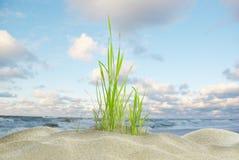 Χλόη και θάλασσα αμμόλοφων Στοκ Φωτογραφία