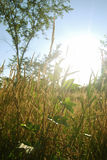 Χλόη και φως του ήλιου στοκ φωτογραφία με δικαίωμα ελεύθερης χρήσης