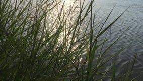 Χλόη κοντά στον ποταμό απόθεμα βίντεο